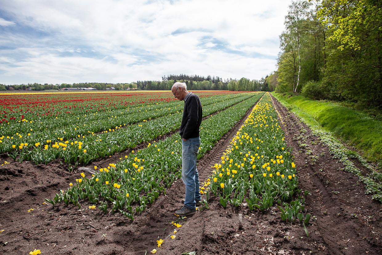 Rob Chrispijn in een tulpenveld naast een bos, niet ver van zijn huis in Vledderveen.  Beeld Harry Cock