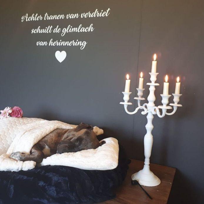 In het crematorium is waardig afscheid genomen van de hond die in Zwolle in het Zwarte Water was verdronken, met de pootjes aan elkaar geboden met tiewraps.