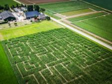 Verdwalen in metershoog maisdoolhof in Klaaswaal