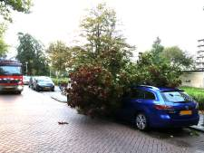 Lichte schade door storm in Groene Hart, openluchtbioscoop afgelast