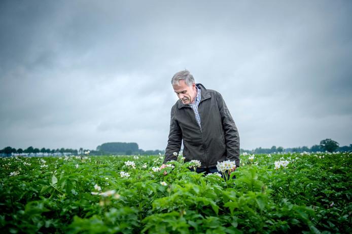 Evert Jacobsen in de proefvelden vol aardappels in Wageningen.