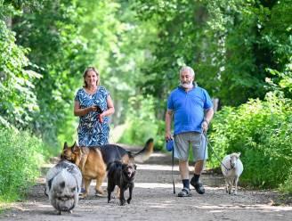 """Op wandel met honden, schaap en... hangbuikzwijn: """"Zelfs in Canada en China is Knor bekend"""""""