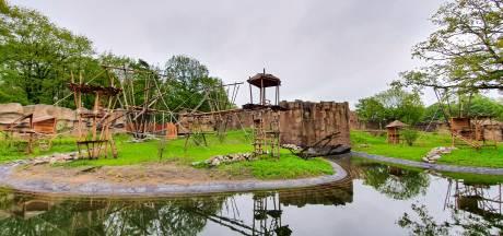 Bonobo's voor het eerst te bewonderen in dit splinternieuwe verblijf in Ouwehands