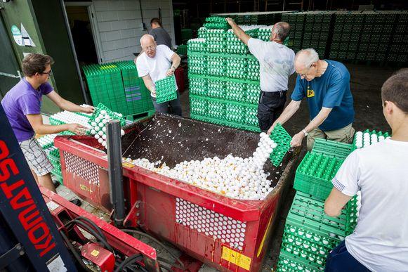 Pluimveehouders moeten worden vergoed voor de geleden schade veroorzaakt door fipronil-sjoemelaars.