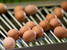 NVWA bevestigt: Ook fipronil in geïmporteerde eieren uit Polen