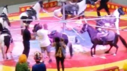 Kameel slaat op hol tijdens circusvoorstelling: zes kinderen en volwassene gewond