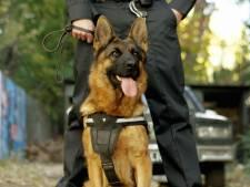 Politie zet na wilde achtervolging hond in bij aanhouding voor autodiefstal in Ochten