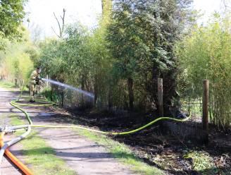 Tientallen meters riet gaan in vlammen op, ook  tuinhuis loopt schade op