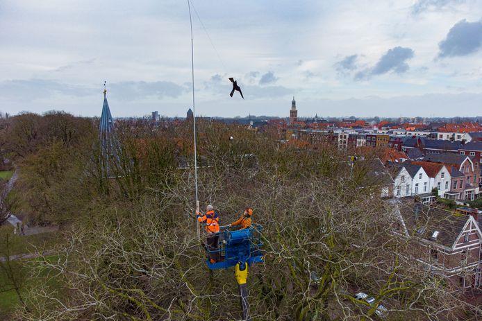 De gemeente Kampen begon in februari met het verwijderen van nesten van Roeken en het plaatsen van vogelverschrikkers in het stadspark van Kampen. De vogels gaven overlast en poepten de buurt eronder.