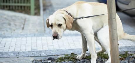 Rozenburg is het beu: schaf belasting op hond af
