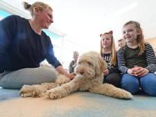 'Even knuffelen met schoolhond Zapp in Goor en het is rustig in de klas'