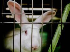 Tientallen dieren dood door brand in Duitse dierenwinkel