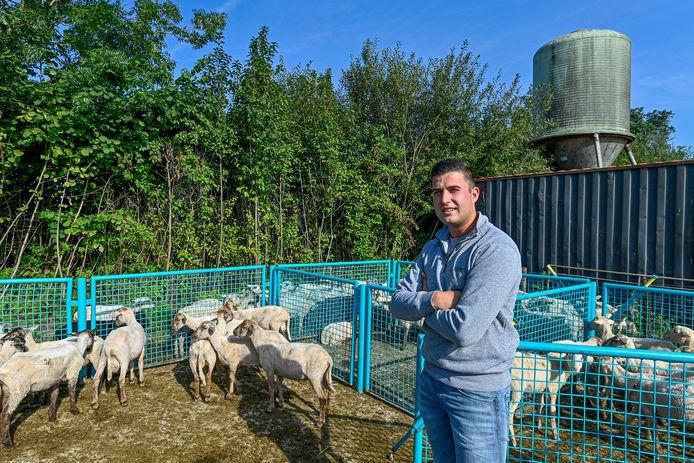 Schapenhouder Luc van Driel uit Oudemolen. De wol van de schapen is flink in waarde gedaald