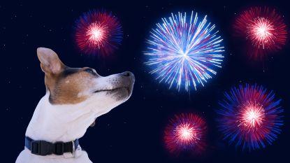 Deze tips zorgen ervoor dat vuurwerk geen ware hel wordt voor uw huisdier