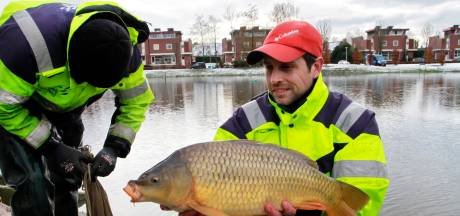 Groot onderzoek naar visstand in Barendrecht en de Zuid-Hollandse eilanden