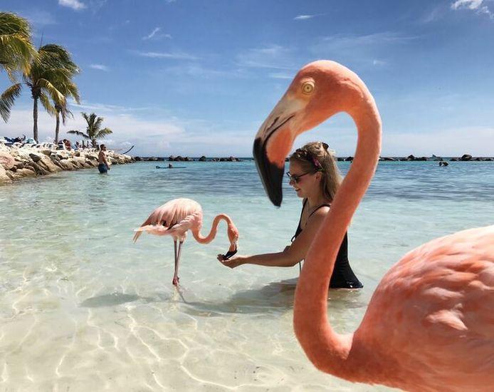 Op Aruba zag ik deze jongedame door de nek van een flamingo.