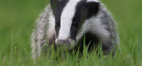 Wilde dieren in de Biesbosch vastgelegd: 'Die ene video is het allemaal waard'