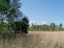 Zonnewoud en attractiepark Staatsbosbeheer in Zeewolde gaan door