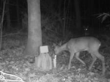 Deze (wilde) dieren lopen 's nachts door de tuin: Ciske en zijn klasgenoten filmden ze