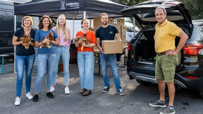 Meer dan 1.300 kippen naar Lebbeekse gezinnen in strijd tegen afvalberg