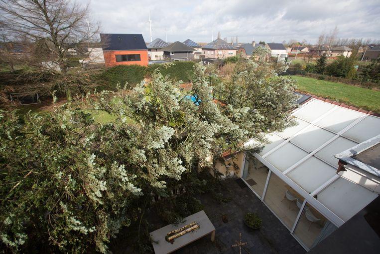 De boom werd volgende maand gekapt.