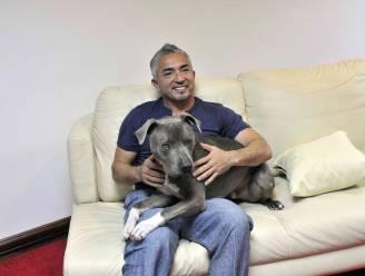 """Beroemde hondenfluisteraar Cesar Millan walgt van mensen die spuitje willen voor hond van Biden: """"Dan heb je het echt niet begrepen"""""""