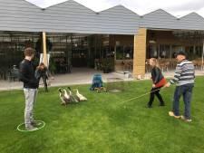 Eenden door parcours jagen met hond: Leuk entertainment of dierenmishandeling?
