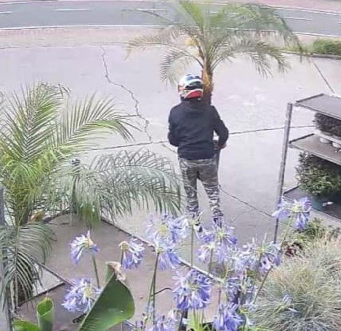 De dief ging aan de haal met een palmboom, kleine olijfboom en een artisjokplant.
