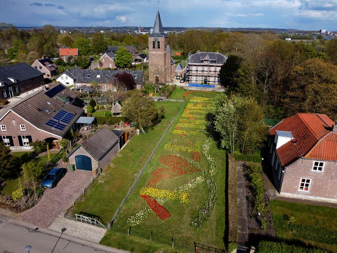 Kleur in Linden door de bollen die Siska van Kessel met dorpsgenoten naast de kerk plantte.