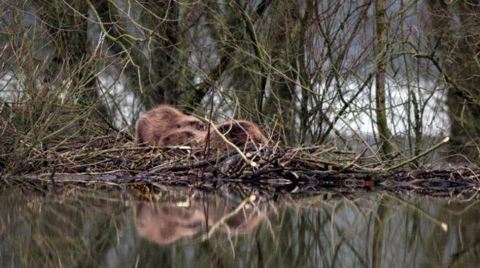Werry Crone Fotografie / Staatsbosbeheer