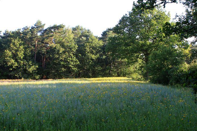 Een voorbeeld van een voor bijen paradijselijk gebied.