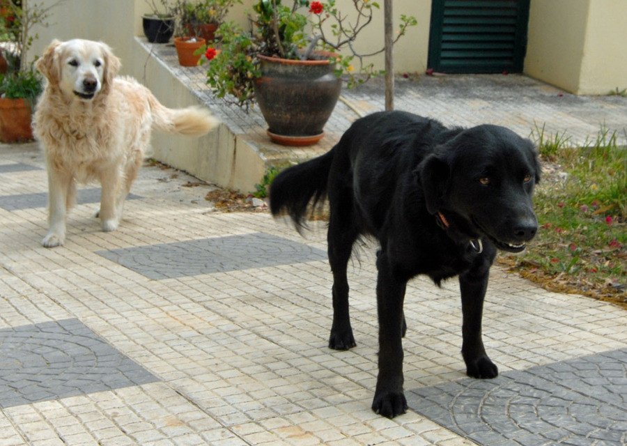 Onafscheidelijk: Ollie en Casper.