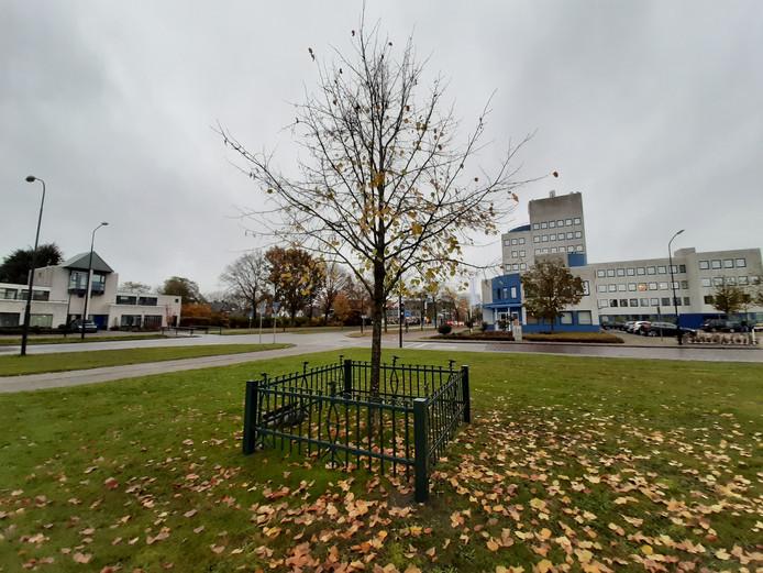 Het hekje, dat vroeger op het Raadhuisplein stond, is om de Koningslinde aan de Prins Willem Alexanderlaan gezet.