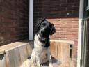 Zijn hond Boet, een Friese Stabij, zou Imko gezelschap houden op de reizen die hij van plan was te gaan maken na de lockdown.