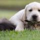 Dít zijn de populairste honden- en kattennamen van 2018
