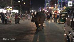 Vreemd zicht: neushoorn kuiert rustig over straat in Nepal