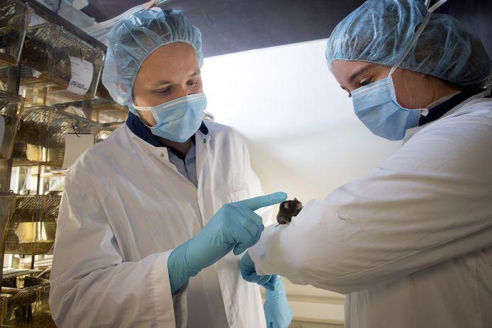 Verouderingsbioloog Peter de Keizer en Marjolein Baar kijken naar de kromming van de rug van een bejaarde muis. Na behandeling bleek die kromming een stuk minder. Foto Levien Willemse