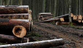 EU-hof: dwangsom als Polen niet stopt met houtkap in oerbos