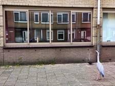 Reiger wacht tevergeefs bij raam overleden dame