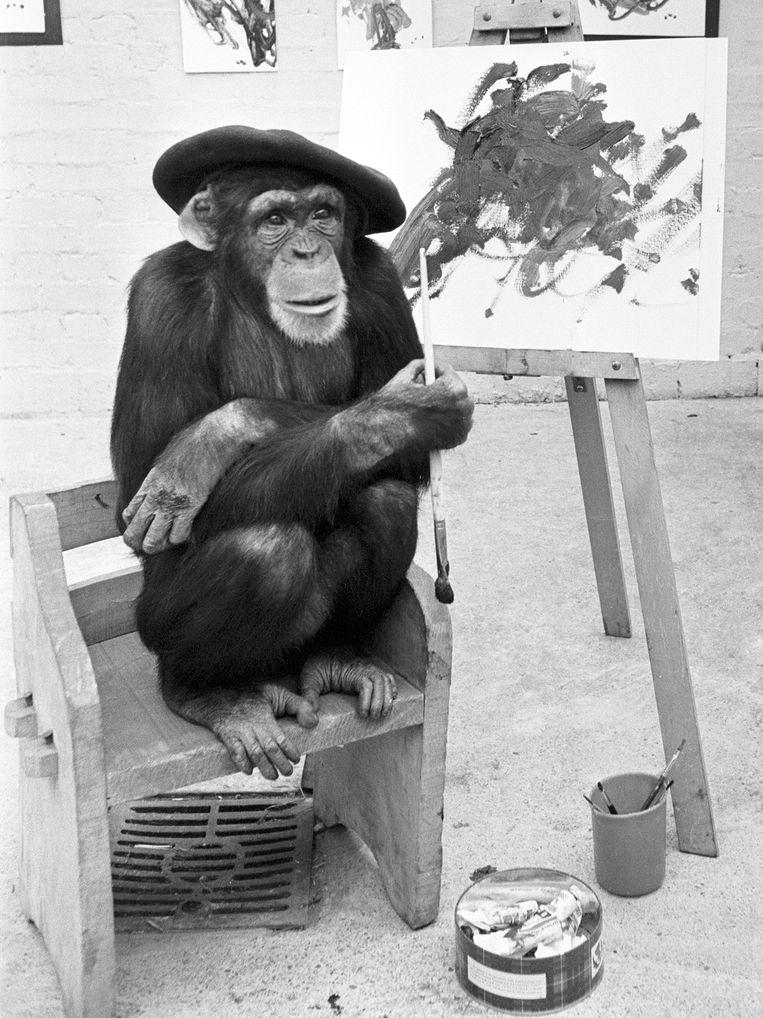 Een chimpansee in de Londense dierentuin toont zijn jongste schilderij, 1955.   Beeld Getty Images