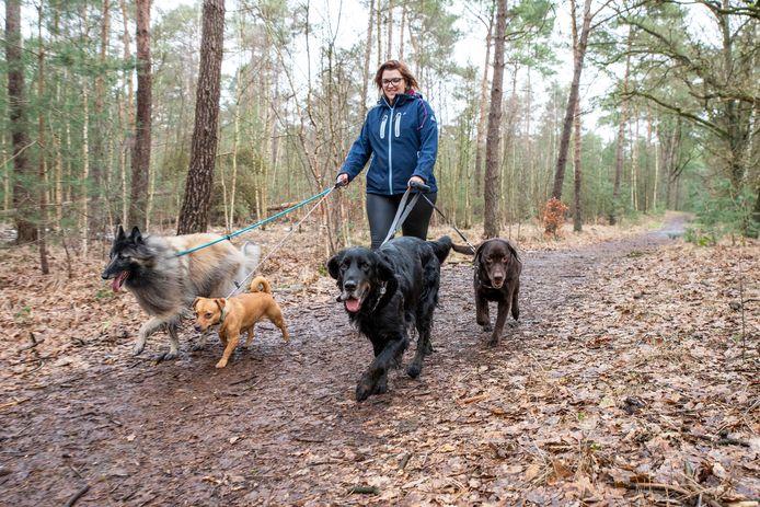Putte, Moreno Molenaar/Pix4Profs  Amanda loopt met meerdere honden door het bos.