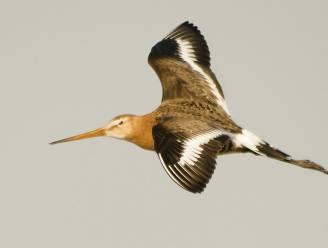 Klimaatverandering doet jonge vogels steeds vroeger migreren