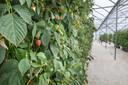 Op lange termijn zou de 'biochart' in de volledige fruitteeltsector gebruikt kunnen worden.