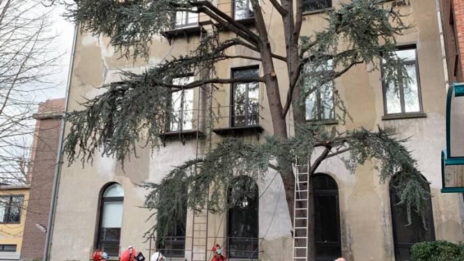 Speciaal reddingsteam Brusselse brandweer rukt uit voor… bange kat in boom