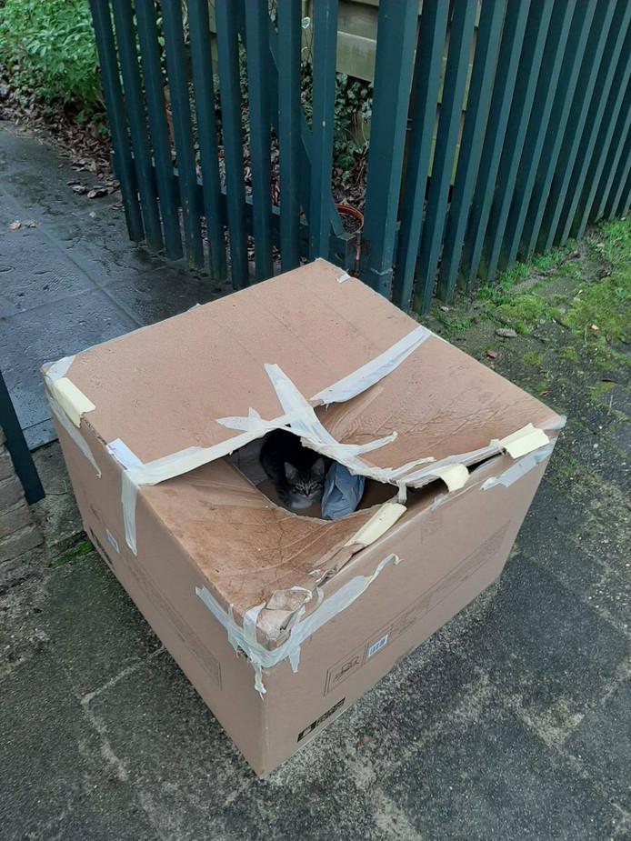 De doos met gedumpte kittens werd op woensdagochtend aangetroffen door de dierenambulance Utrecht