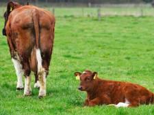 Drie Twentse aanhoudingen in onderzoek naar fraude door mesthandelaar
