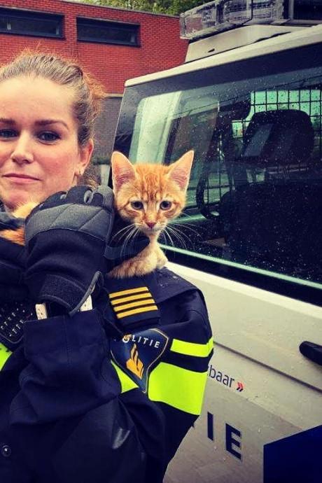 Kitten zit anderhalve week piepend aan een touwtje op het balkon