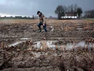 """Boeren hebben kopzorgen na kletsnatte julimaand: """"Binnen tien jaar ondervinden we hier nog hinder van"""""""