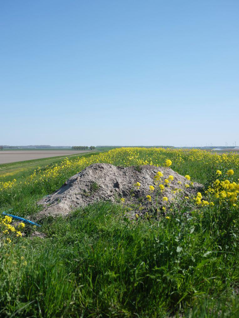 De (nu lege) locatie van De tong langs de A6 in Flevoland. Beeld Erik Smits