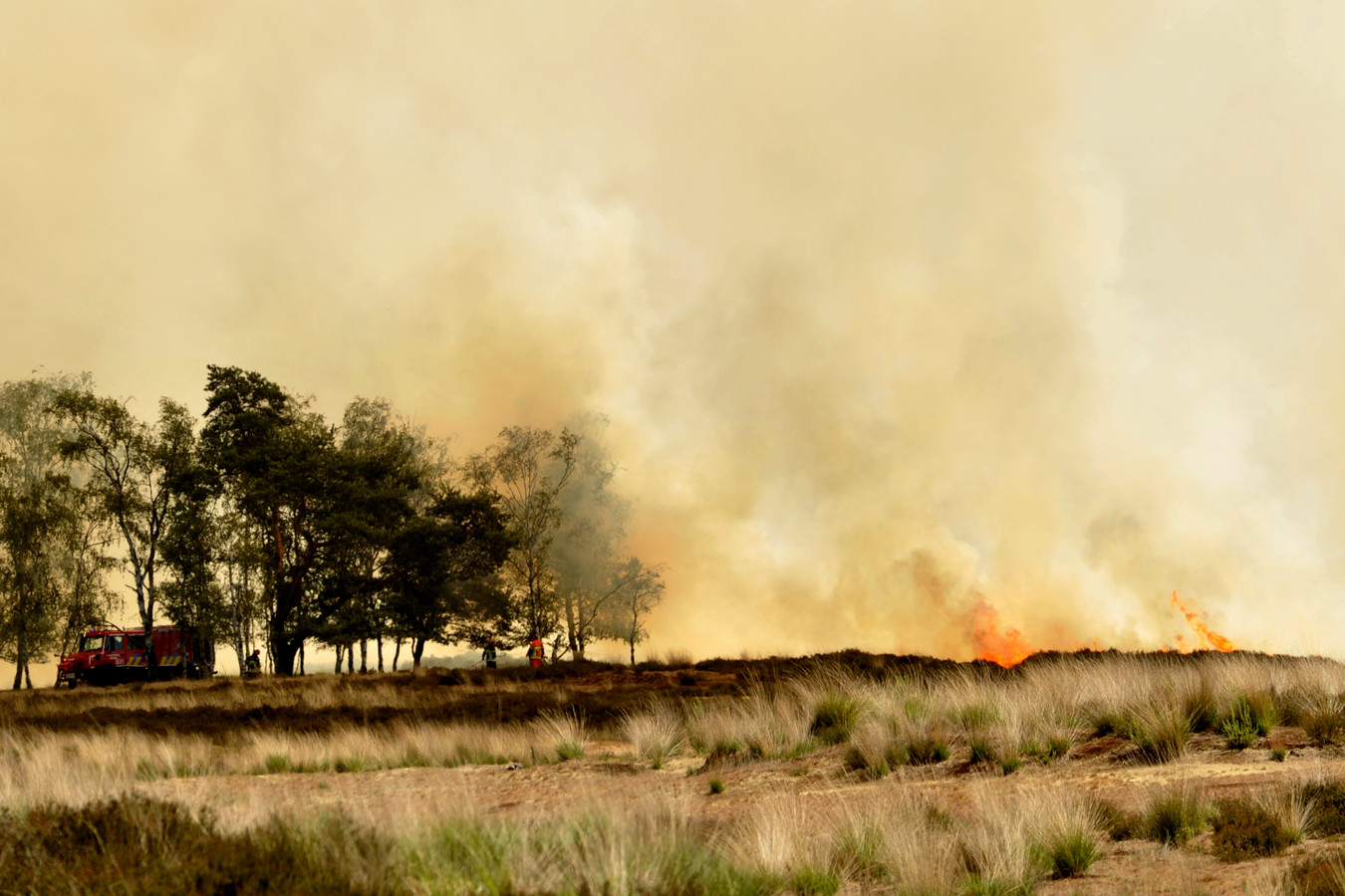 In het voorjaar van 2011 ontstond er een natuurbrand die uiteindelijk 600 hectare van de Kalmthoutse Heide in de as zou leggen.
